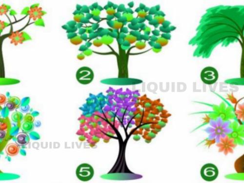 Scegli l'albero che ti piace di più e scopri la forte caratteristica della tua personalità