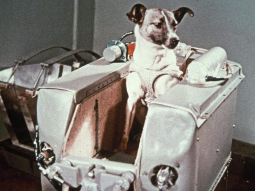 La vera storia della morte di Laika
